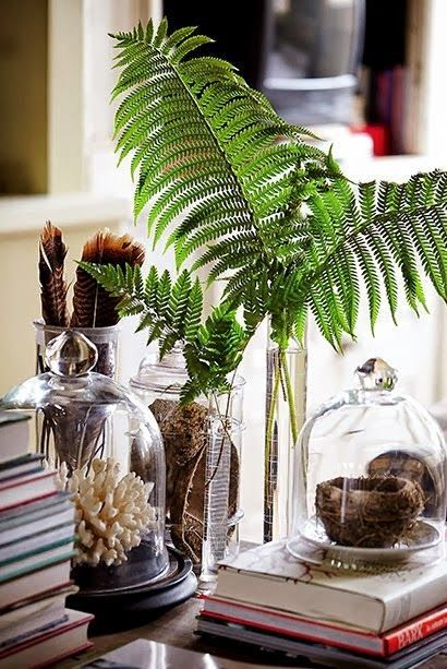 Plant cuttings in a glass bottle