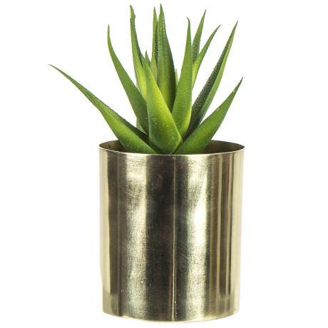Image of aloe vera plant