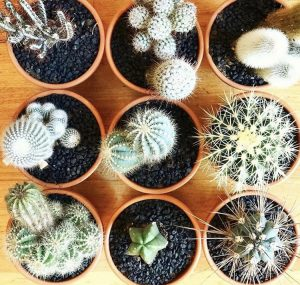 Cacti - easiest plants to look after