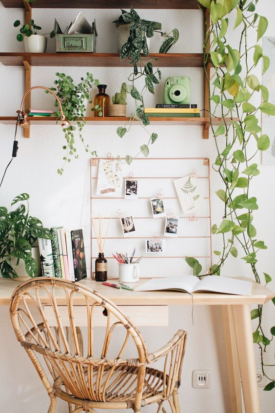 office setting with hanging plants