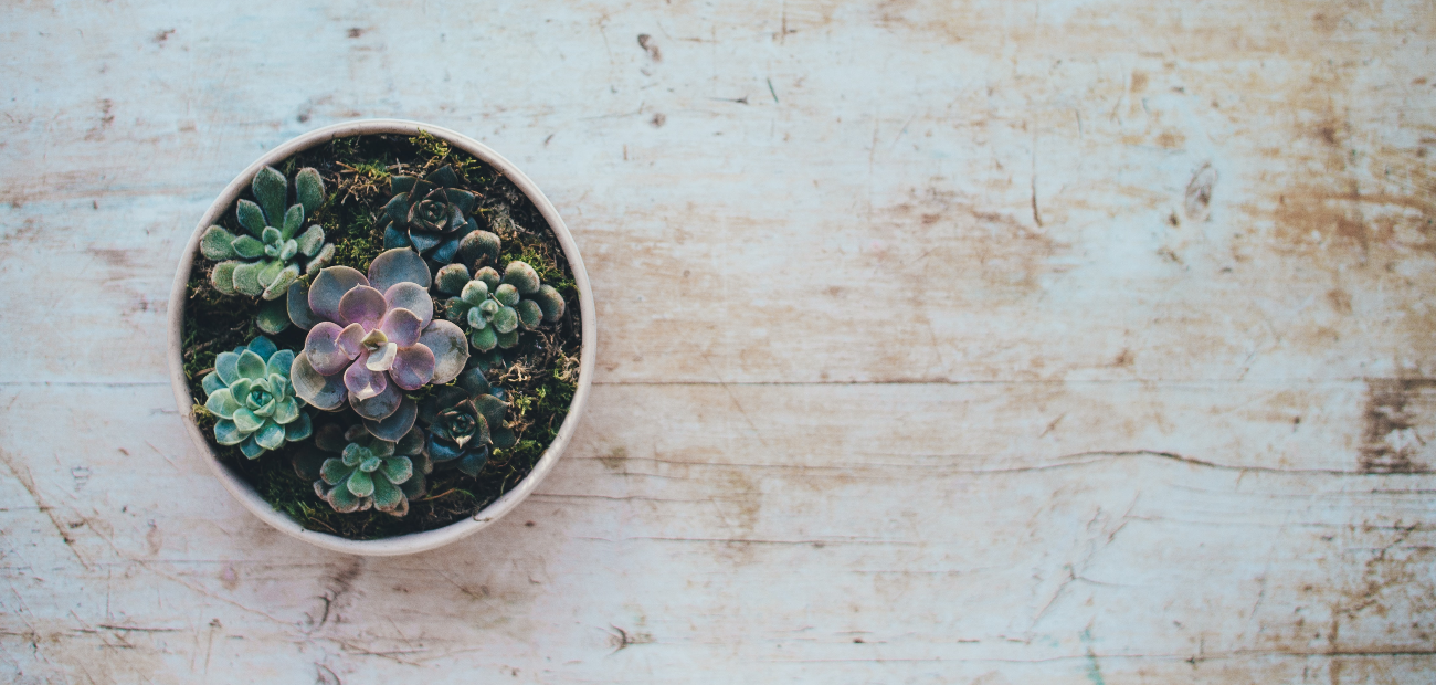 succulent plants in a bowl